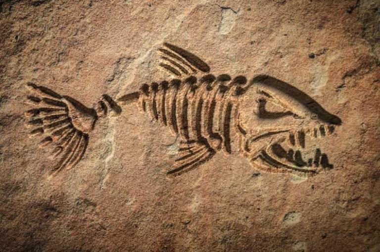 fossil-abertura